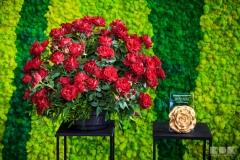 Konkurs o Złotą Różę