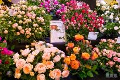 Ogólnopolska Wystawa Róż