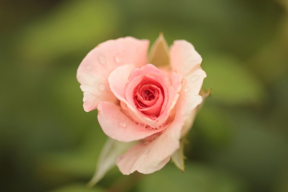 Róża Kopernik, Dworek Modrzewiowy