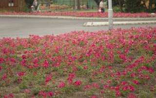 Róża Marathon, Rondo Solidarności